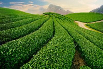 Khám phá cao nguyên Mộc Châu – Happy Land